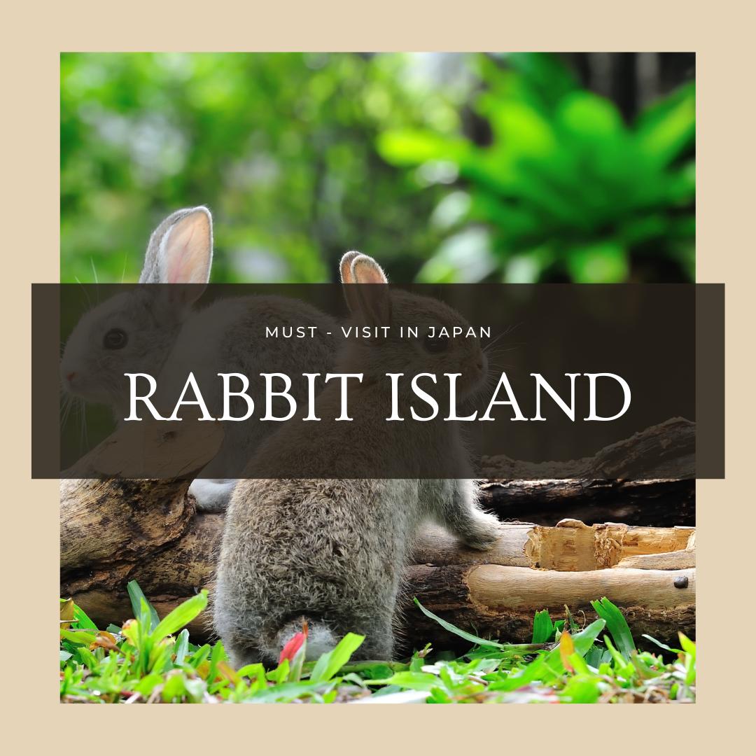 Must-Visit in Japan: Rabbit Island